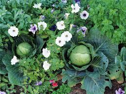 being an urban gardener creating a city vegetable garden gardening