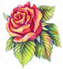 rose pencil sketch drawings colour how to draw a flower color