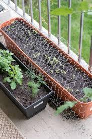 balcony vegetable garden growing a on garden trends