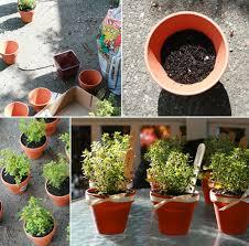 Flower Pot Wedding Favors - herbs in terracotta pots cute garden themed baby shower favors