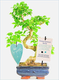 meaning of bonsai tree gift waterboard me