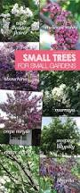 native plants australia small trees in small gardens about the garden magazine