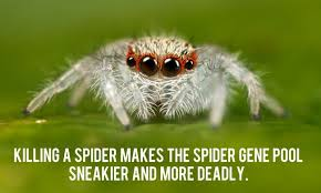 Image 325848 Misunderstood Spider Know - 36 random facts that ll stop you dead in your tracks i never