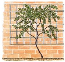 Support For Climbing Plants - supporting climbing plants properly