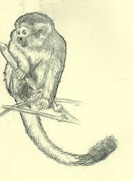 bolivian squirrel monkey sketch by masterdude3000 on deviantart