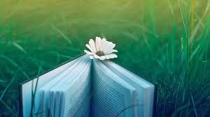 pretty book wallpaper 41790 1920x1080 px hdwallsource com