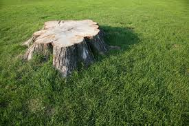 How To Build A Stump by Home Remedies To Kill A Tree Stump Home Guides Sf Gate