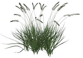 landscaping turf grass rocky mountain bio productsrocky