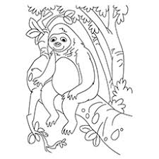 10 sloth coloring pages toddler