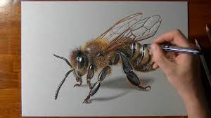 how to draw a 3d bee youtube