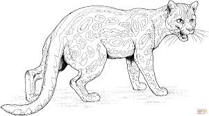 ocelot coloring page coloring pages for adults 5873