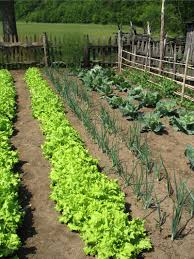 When To Plant Spring Vegetable Garden by Growing Garden Vegetables
