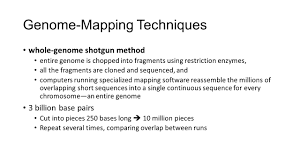 Genome Mapping Chapter 12 Aultman Winter Ppt Download