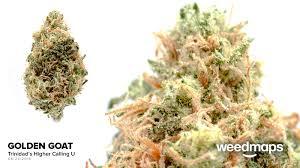 Weed Map Colorado by Trinidad Colorado Dispensary Colorado Weed Stores Walsenburg