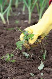 What Type Of Soil To Use For Vegetable Garden Maintaining And Monitoring The Garden U2013 Farm To Institution