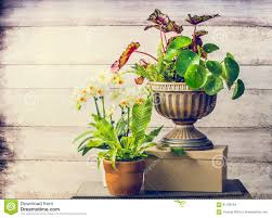 Pretty Plants by Pretty Plants And Orchid Flowers For Indoor Container Gardening