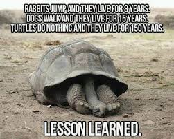 Nothing To Do Meme - 9 turtles do nothing lesson learned meme pmslweb