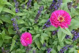 cut flower gardens gardening solutions university of florida
