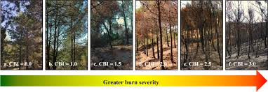 remote sensing free full text forest fire severity assessment