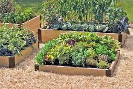 Small Garden Bed Design Ideas Small Wood Diy Raised Bed Designs Vegetable Gardens Ideas With