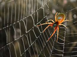 spider web backgrounds wallpapersafari