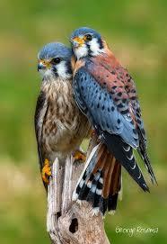 best 25 birds ideas on pinterest beautiful birds pretty birds
