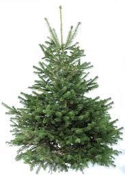 beautiful christmas trees idolza
