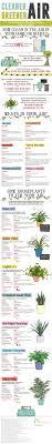 10 easy care plants for best 25 cool indoor plants ideas on pinterest indoor herbs