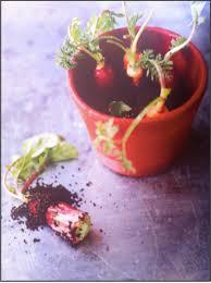 cuisine du terroir definition creating terroir an anthropological perspective on nordic