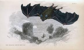 vintage halloween artwork bat artwork images reverse search