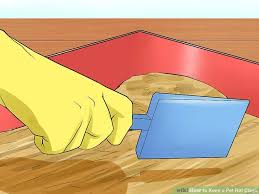how to keep a pet rat clean with pictures wikihow