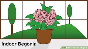 Easy To Care For Indoor Plants Expert Advice On How To Care For A Begonia Wikihow