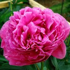 sams club wedding flowers bulk floral sam s club