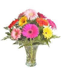 florist columbus ohio home connells maple flowers and gifts flowers plants and