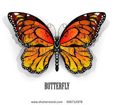 orange monarch butterfly on white stock vector 566712976