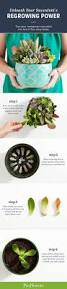 95 best garden plants ornamentals images on pinterest garden