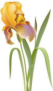 iris flower png clip art best web clipart