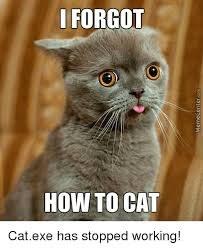 Working Cat Meme - 25 best memes about cat exe cat exe memes