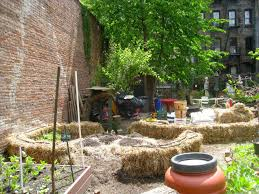 straw bales get final prep before planting nyc foodscape