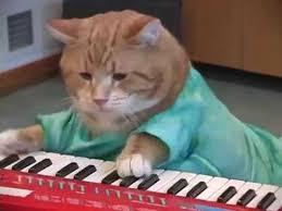 Keyboard Cat Meme - keyboard cat reincarnated youtube