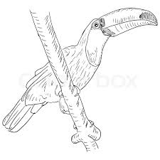 toucan bird sitting on a tree branch stock vector colourbox