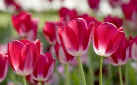 spring purple flowers 7297 2560 x 1600 wallpaperlayer com
