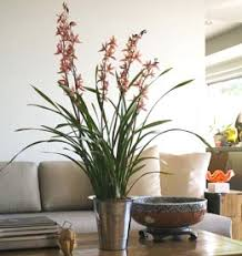 Artificial Plants Home Decor Spice Up Your Decor With Artificial Plants
