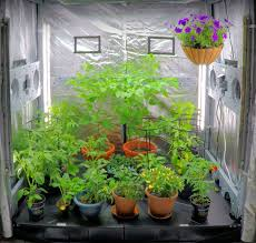 top blogs to follow for indoor greenhouse growers ecogardenhouse