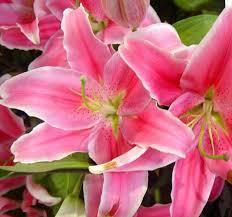 Send Flower Gifts - 12 best gangtok florist send flowers gifts gangtok images on