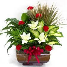 sympathy plants sympathy planters sympathy flowers plants florist columbus ohio