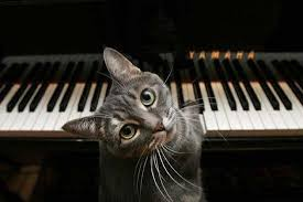 Piano Meme - nora the cat know your meme