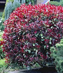 Pflanzen Fur Japanischen Garten Moderne Renovierung Und Innenarchitektur Tolles Winterharte