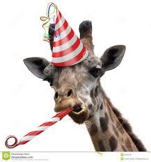 Giraffe Hat Meme - giraffe birthday meme giraffe in birthday s hat funny picture