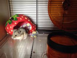 How Much Is A Hamster Cage History About Hamsters Hamsters Guide Omlet Uk